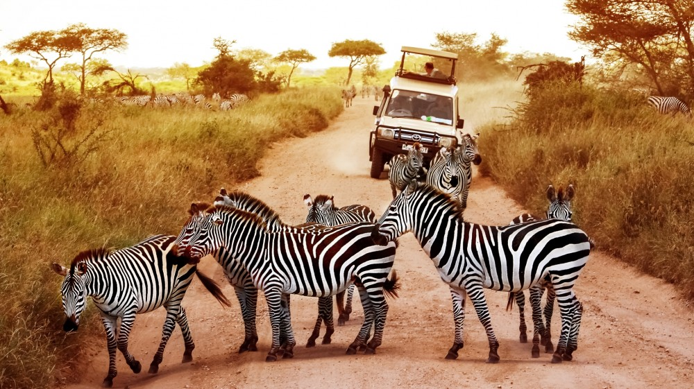 2 Days Tanzania Safaris Short and Sweet