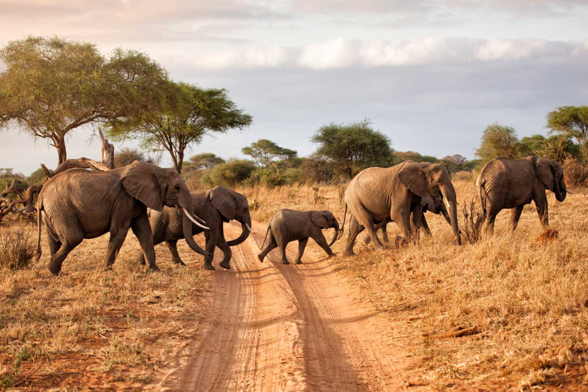3 Days Tanzania  Wildlife Safaris