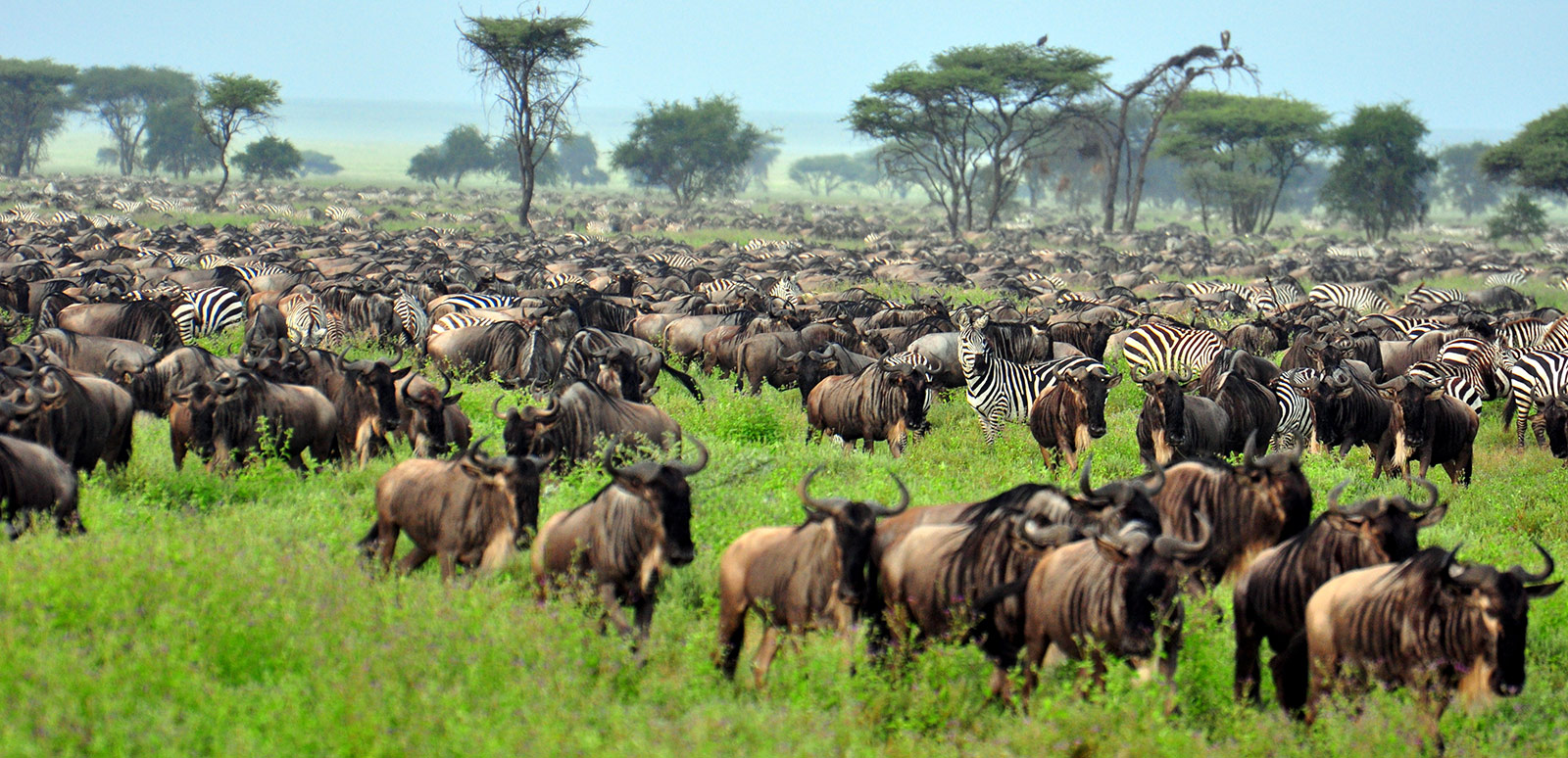 4 Days Tanzania Wildebeest Migration Safaris